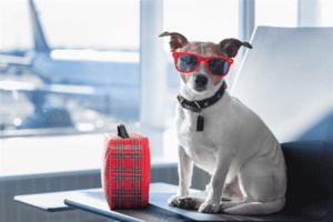 הטסת כלב לפורטוגל